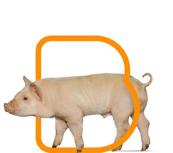 Bioter Cerdos Recría