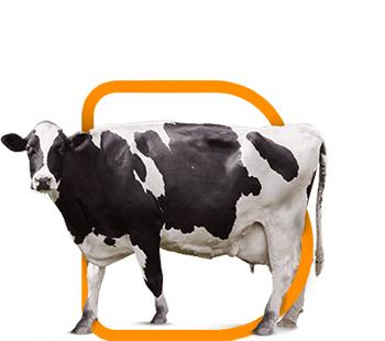 fondo-bovinos-leche-preparto