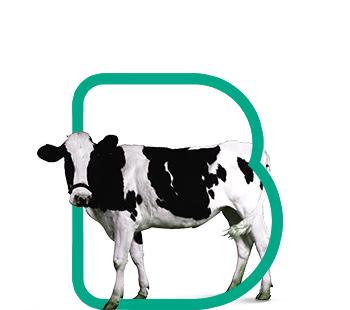 fondo-bovinos-leche-recria