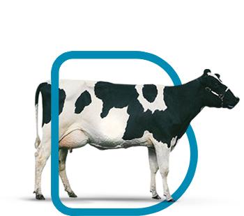 fondo-bovinos-leche-reproduccion
