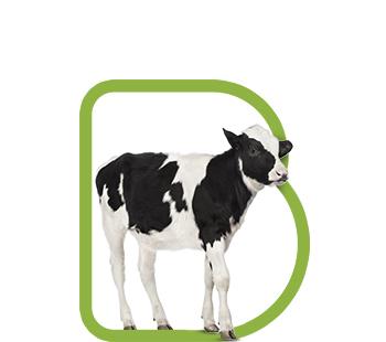 fondo-bovinos-terneros